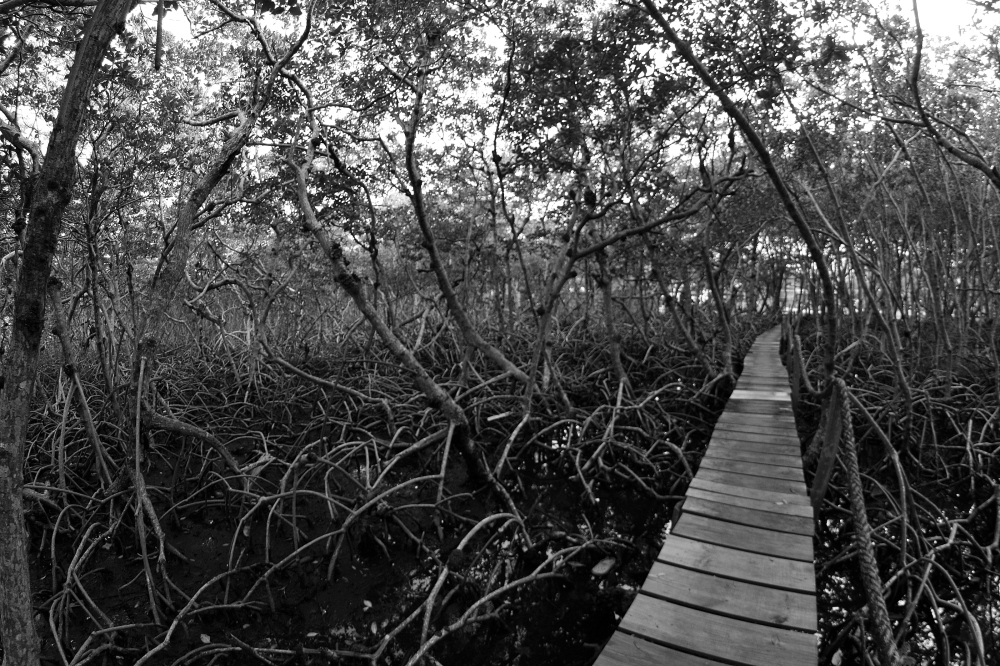 Into the Mangroves at Wee Wee Caye Marine Lab in Belize by Kimberly Wilkins